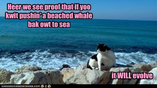 Heer we see proof that if yoo kwit pushin' a beached whale bak owt to sea it WILL evolve