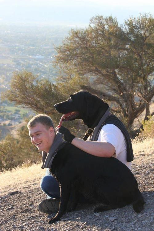 face swap dogs - 7135469824