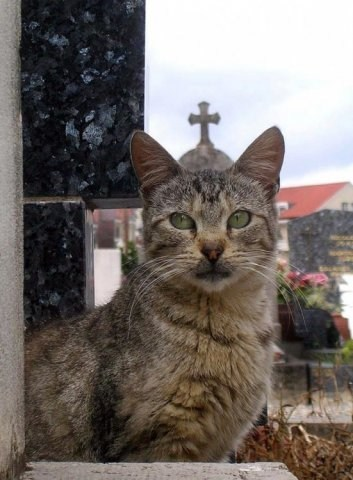 pope Cats - 7135481088