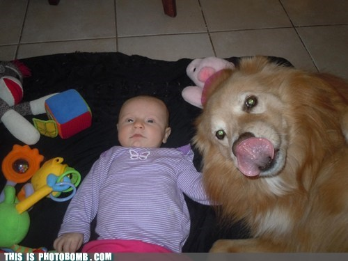 baby,cute,dogs