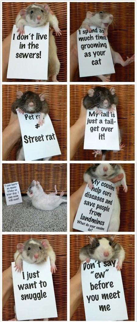 rats,pets,misunderstood