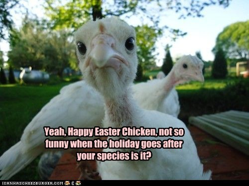 Yeah, Happy Easter Chicken, not so funny when the holiday goes after your species is it?
