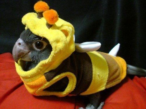 costume,bumblebees,parrots,birds,squee