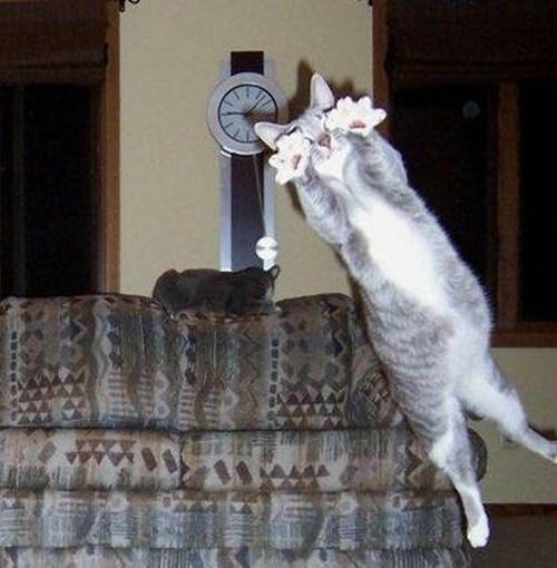 pets,no,Cats