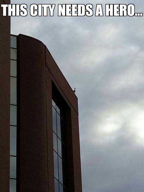 city ducks buildings superhero - 7135892224