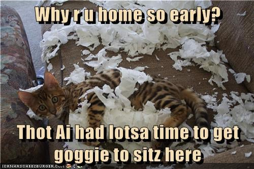 naughty paper Cats - 7137234432