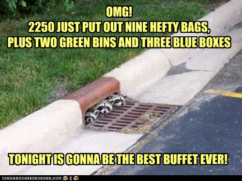 OMG! 2250 JUST PUT OUT NINE HEFTY BAGS, PLUS TWO GREEN BINS AND THREE BLUE BOXES TONIGHT IS GONNA BE THE BEST BUFFET EVER!