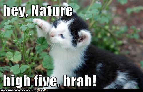 kitten outside Cats - 7137872640