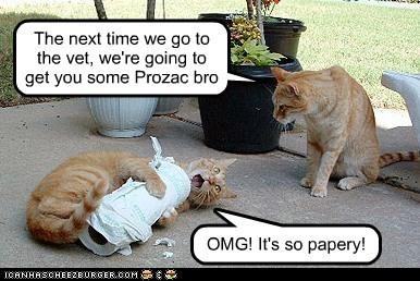 paper outside vet Cats - 7137898240