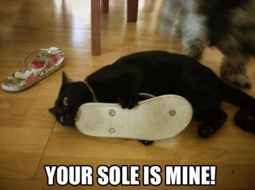 soles,sandles,Cats