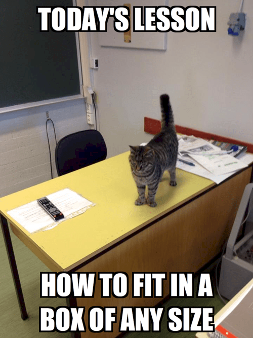 school,if it fits i sits,teacher,Cats