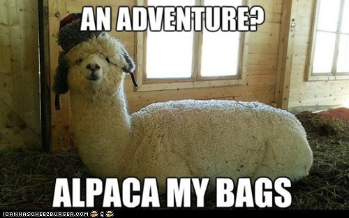 alpaca,pun,adventure