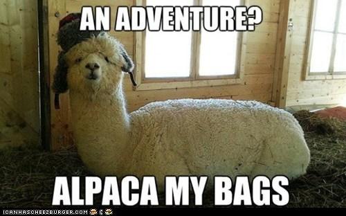 alpaca pun adventure - 7138257152