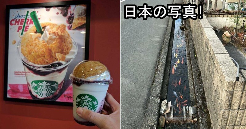 weird japan, wonderful japan | pic of American Cherry Pie inspired Starbucks drink in Japan | koi fish swimming in the water drainage canals in Japan