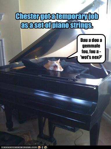 Chester got a temporary job as a set of piano strings. Dau a dou a gemmale fou, fou a - 'wot's nex?'