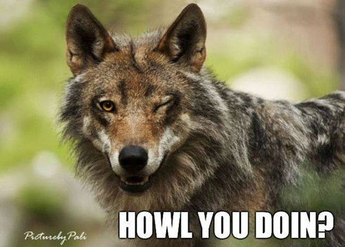 howl wink wolf - 7138832128