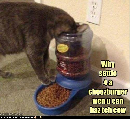 Cheezburger Image 7139090432