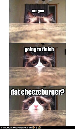 Cheezburger Image 7139380992