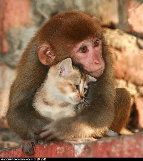 baby monkey with large eyes and small kitten snuggling together