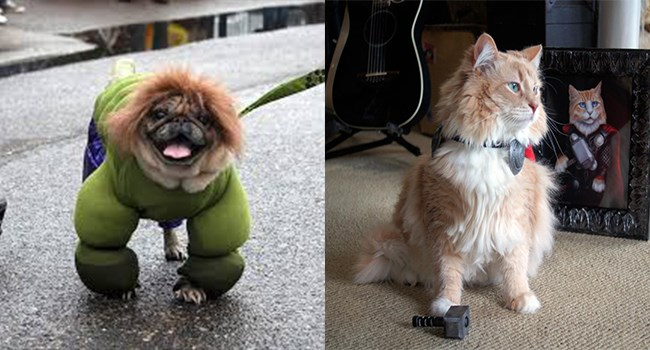 cats and dogs dressed as superheroes