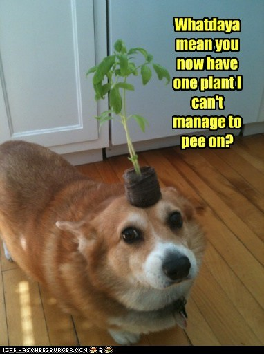 dogs,pee,challege,plant,funny