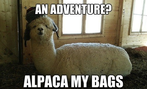 alpaca,pack,bags,similar sounding,adventure