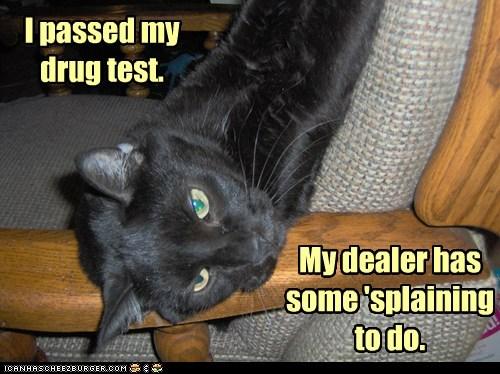 I passed my drug test. My dealer has some 'splaining to do.