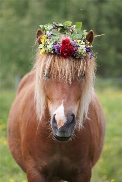 spring horse season - 7140800512
