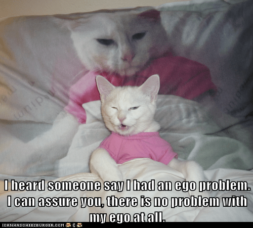 bed,problem,ego,Cats