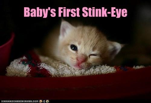 baby,stink eye