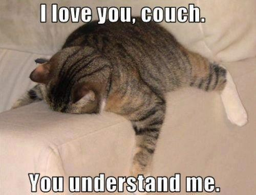 Couch Understands My Pain In A Way You Never Will I Can Has