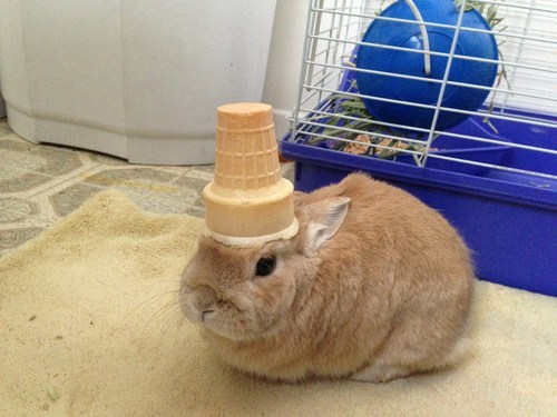 Bunday,bunnies,ice cream,squee,rabbits