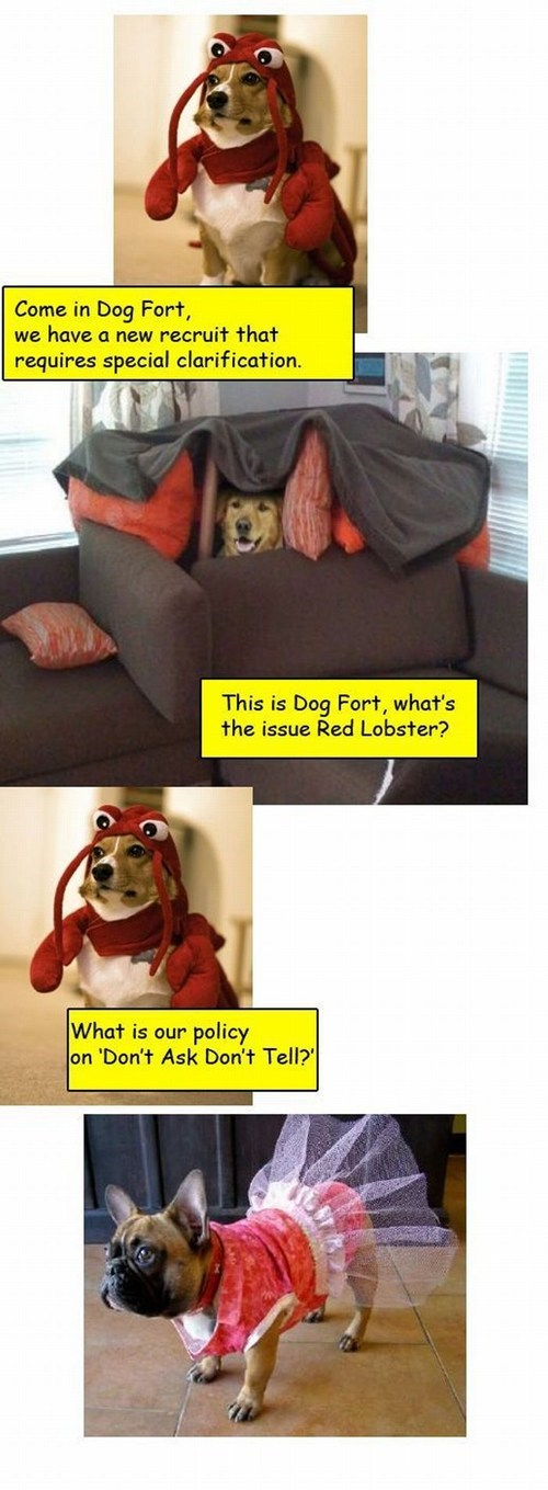 Photo caption - Come in Dog Fort, we have a new recruit that requires special clarification. This is Doq Fort, what's the issue Red Lobster? What is our policy on 'Don't Ask Don't Tell?""
