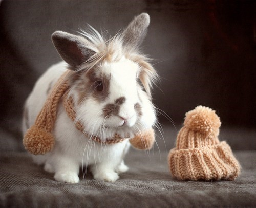 Bunday,bunnies,cozy,hats,scarves,squee,rabbits
