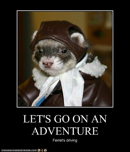 LET'S GO ON AN ADVENTURE Ferret's driving