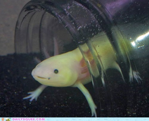 axolotl,glass house,science