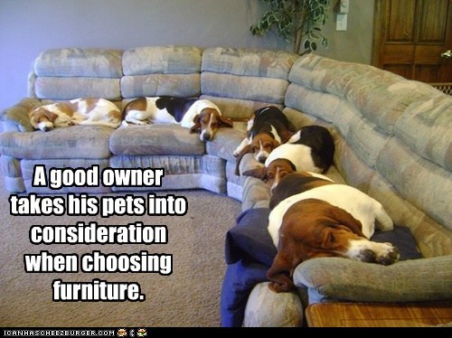 A good owner takes his pets into consideration when choosing furniture.