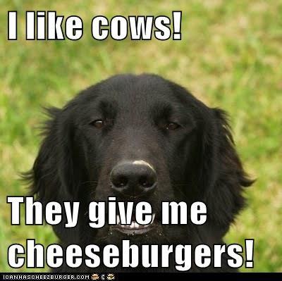 Cheezburger Image 7142745600