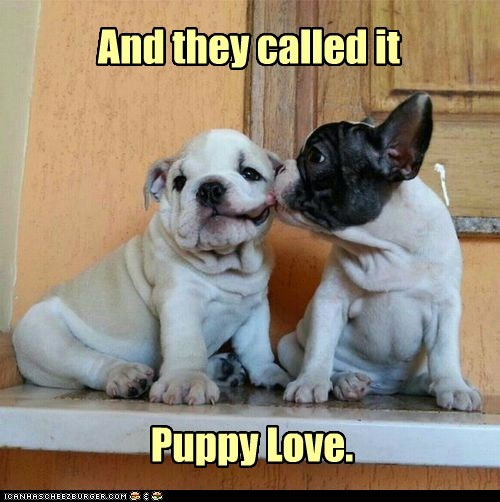 And they called it Puppy Love.