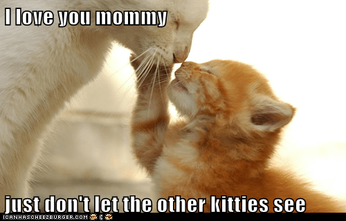 kitten love mom Cats - 7143142656