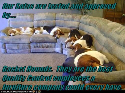 Our Sofas are tested and approved by.... Basket Hounds. They are the best Quality Control employees a furniture company could every have.