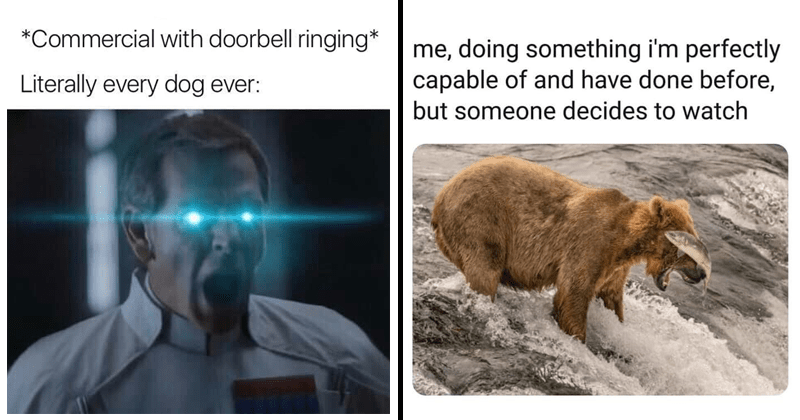 Funny memes, random funny memes.