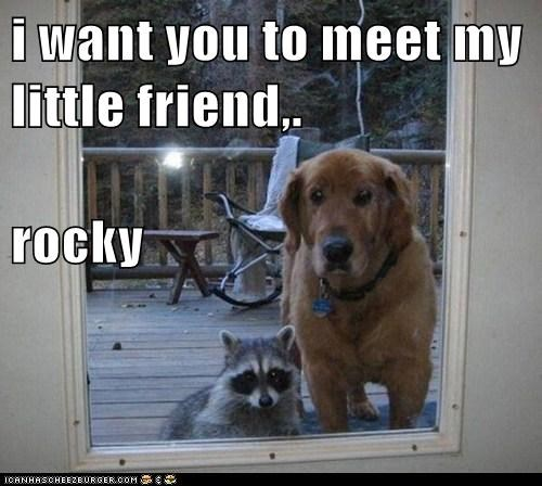 raccoon,friends