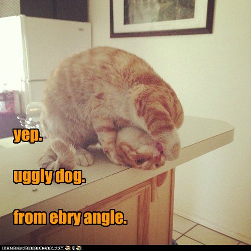 yep. uggly dog. from ebry angle.