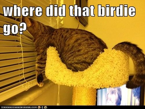blinds bird - 7143730432