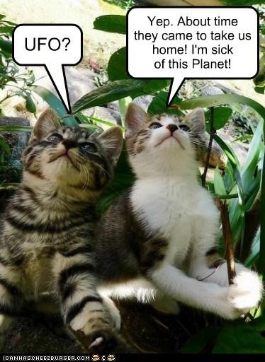 kitten ufo outside Cats - 7143953152