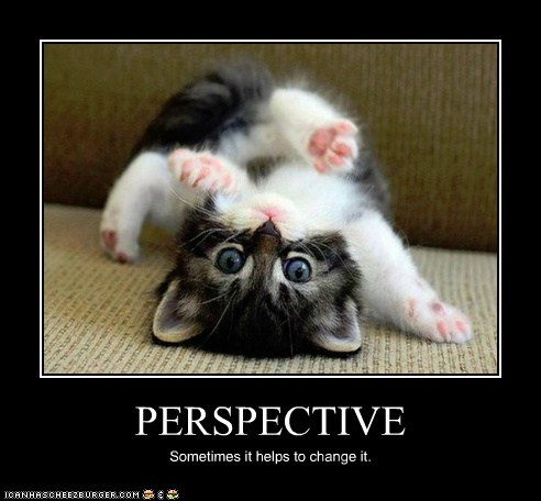 kitten demotivational Cats - 7144611840