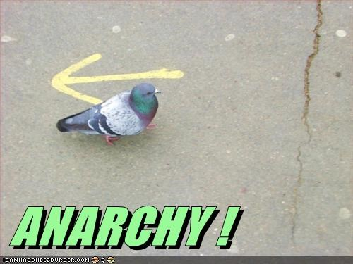 anarchy pigeon - 7144677376