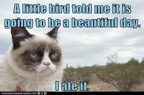 Grumpy Cat bird - 7144916480