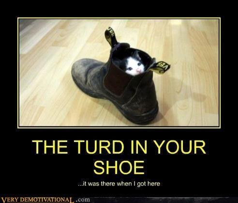 cat wtf poop joke - 7145039616